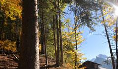 The summer forest of Morzine